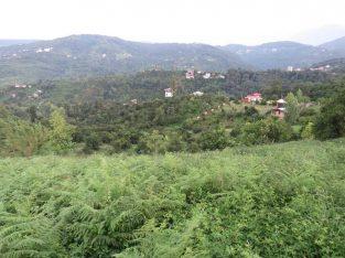 زمین با ویو جنگل و دریا